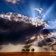 """Title: """"3 trees, rays of light 01"""", 2013 (printed on """"fine art baryta"""")"""