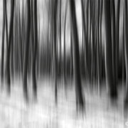 """Title: """"Light and shadow 02, b&w"""", february 2012 (printed on """"bamboo"""")"""