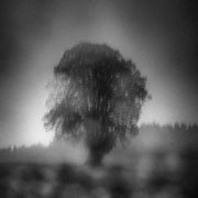 """Title: """"Solitary tree 02, b&w"""", 2019 (printed on """"bamboo"""")"""