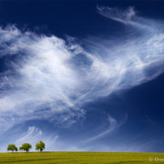 """Title: """"3 trees, up in the air 03.1"""", 2020 (printed on """"fine art baryta"""")"""
