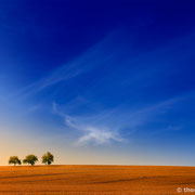 """3 trees, up in the air 07, Triptychon, 2013 (printed on """"fine art baryta"""")"""
