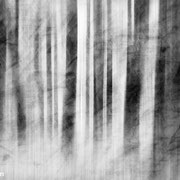 "Title: ""Translucent daydream 03, b&w"", may 2012, composite image 2018 (printed on ""bamboo"")"