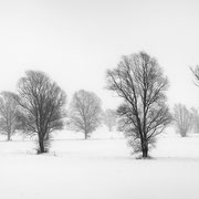 """Title: """"A winter's tale 03, b&w"""", december 2014 (printed on """"bamboo"""")"""