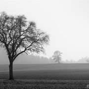 """4 Trees 01, b&w, march 2014 (printed on """"bamboo"""")"""