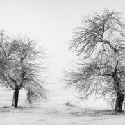 """Title: """"Waiting for spring 04, b&w"""", january 2016 (printed on """"bamboo"""")"""