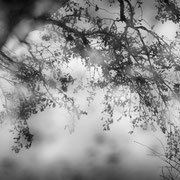 "Title: ""November rain 04, b&w"", november 2014 (printed on ""bamboo"")"