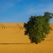 """Title: """"Summer in the fields 01"""", june 2014 (printed on """"fine art baryta"""")"""