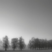 """Alley trees in the mist 01, b&w, january 2014 (printed on """"bamboo"""")"""