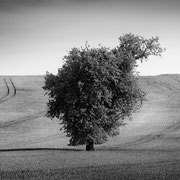 "Title: ""Springtime in the fields 02, b&w"", may 2014 (printed on ""bamboo"")"
