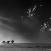"""3 trees, up in the air 10, b&w, 2015 (printed on """"fine art baryta"""")"""