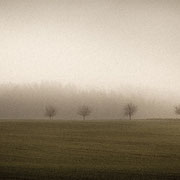 """Title: """"6 little trees in the mist 01"""", december 2015 (printed on """"bamboo"""")"""