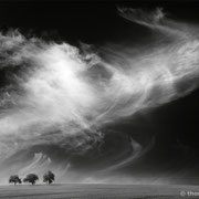 """3 trees, up in the air 03, b&w, triptych, 2014 (printed on """"fine art baryta"""")"""