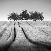 """Springtime in the fields 04, b&w, may 2017 (printed on """"bamboo"""")"""