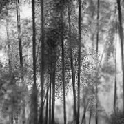"""Abstract winter reed 01, b&w, february 2014 (printed on """"bamboo"""")"""