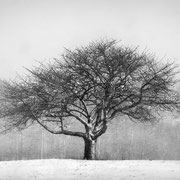 """Title: """"Solitary tree 01, b&w"""", february 2020 (printed on """"bamboo"""")"""