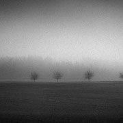 "Title: ""6 little trees in the mist 01, b&w"", december 2015 (printed on ""bamboo"")"