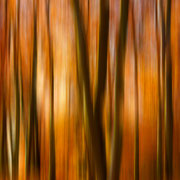 """Title: """"Autumnal daydream 03"""", october 2018 (printed on """"fine art baryta"""")"""
