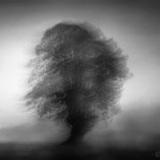 "Title: ""Liquid tree 03, b&w"", april 2019 (printed on ""bamboo"")"