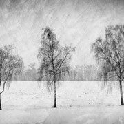 """Title: """"Lost in tranquility 06, b&w"""", december 2014, compositing image 2018 (printed on """"bamboo"""")"""