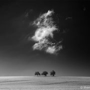 """3 trees, perfect day 01, b&w, 2015 (printed on """"fine art baryta"""")"""