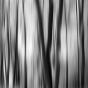 """Title: """"Impressions of light 07, b&w"""", october 2018 (printed on """"bamboo"""")"""