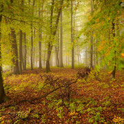 """Title: """"A touch of autumn 01"""", october 2012 (printed on """"fine art baryta"""")"""