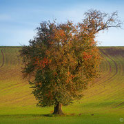 """Title: """"Autumn in the fields 02"""", october 2014 (printed on """"fine art baryta"""")"""