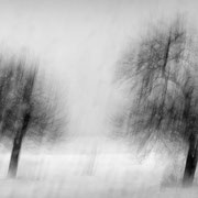 "Title: ""Poetic trees 04, b&w"", december 2014 (printed on ""bamboo"")"
