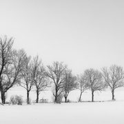"""Title: """"Row of trees 06, b&w"""", 2021 (printed on """"bamboo"""")"""