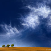 """Title: """"3 trees, up in the air 06.2"""", 2020 (printed on """"fine art baryta"""")"""