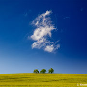 """Title: """"3 trees, perfect day 01.1"""", 2015 (printed on """"fine art baryta"""")"""
