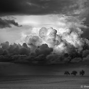 "3 trees, the rain will come !!, b&w, 2014 (printed on ""fine art baryta"")"