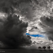 "Title: ""3 trees, blue sky 02"", 2017 (printed on ""fine art baryta""), see also gallery monochrome"