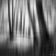 "Title: ""Impressions of light 08, b&w"", may 2019 (printed on ""bamboo"")"