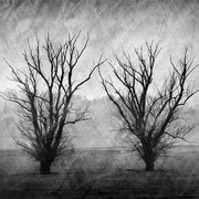 """Title: """"Lost in tranquility 12, b&w"""", march 2014, compositing photograph 2020 (printed on """"bamboo"""")"""