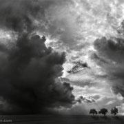 "3 trees, bad hair day 03, b&w, 2014 (printed on ""fine art baryta"")"