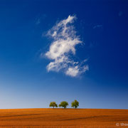 "3 trees, perfect day 01.3, 2015 (printed on ""fine art baryta"")"