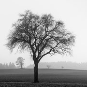 """4 Trees 02, b&w, march 2014 (printed on """"bamboo"""")"""