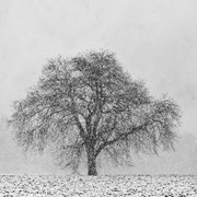 """Title: """"A winter's tale 05, b&w"""", january 2015 (printed on """"bamboo"""")"""