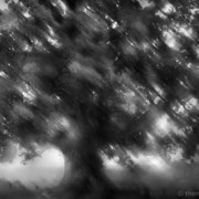 "Title: ""Liquid Tree 01, b&w"", august 2014 (printed on ""bamboo"")"