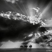 """3 trees, rays of light 01, b&w, 2013 (printed on """"fine art baryta"""")"""