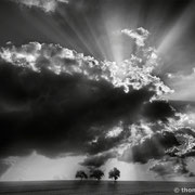 "Title: ""3 trees, rays of light 01, b&w"", 2013 (printed on ""fine art baryta"")"