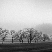 "Row of trees 02, b&w, november 2015 (printed on ""bamboo"")"