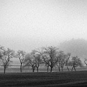 "Row of trees 02, b&w, november 2015 (printed on ""bamboo"")"