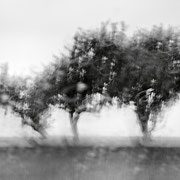 """Title: """"3 little trees 02, b&w"""", august 2014 (see also """"blurry trees"""", printed on """"bamboo"""")"""