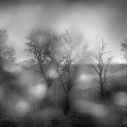 "Title: ""Beautiful rainy day 06, b&w"", march 2015 (printed on ""bamboo"")"