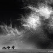 """3 trees, up in the air 06, b&w, triptych, 2014 (printed on """"fine art baryta"""")"""