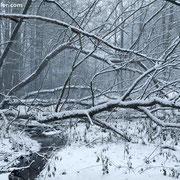 "Fresh snow 03, december 2012 (printed on ""bamboo"")"