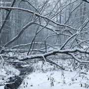 """Title: """"Fresh snow 03"""", december 2012 (printed on """"bamboo"""")"""