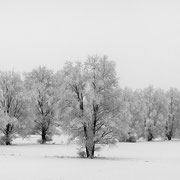 """Title: """"Frozen silence 03, b&w"""", 2021 (printed on """"bamboo"""")"""
